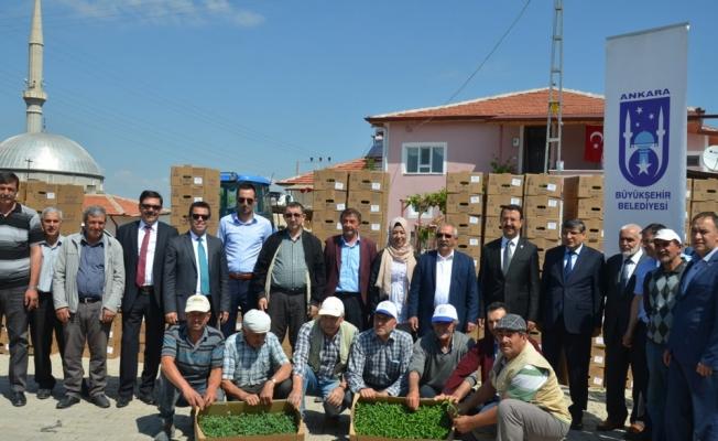 Belediyeden vatandaşlara sebze fidanı