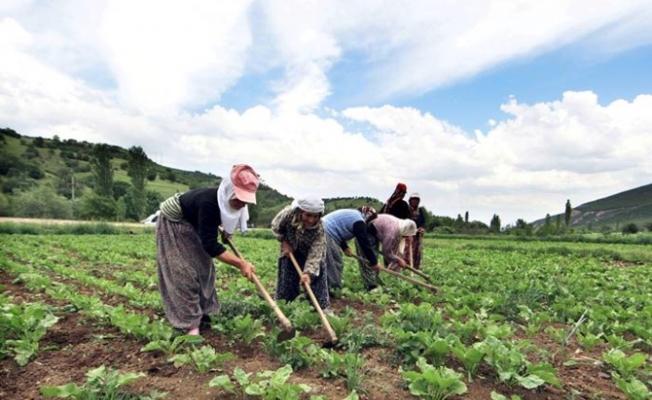 İsrail, Türkiye'den tarım ürünü ithalatını dondurdu