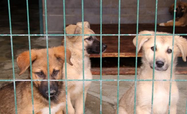 Çankaya'da Sokak Hayvanları Unutulmadı!
