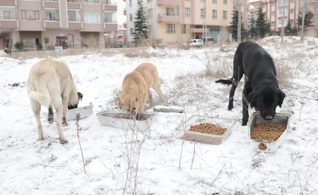 Altındağ Belediyesi sokak hayvanlarına sahip çıktı