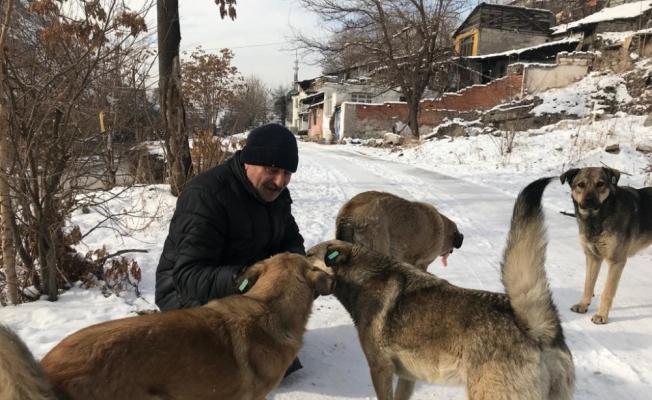 Emekli maaşını sokak hayvanları için harcıyor