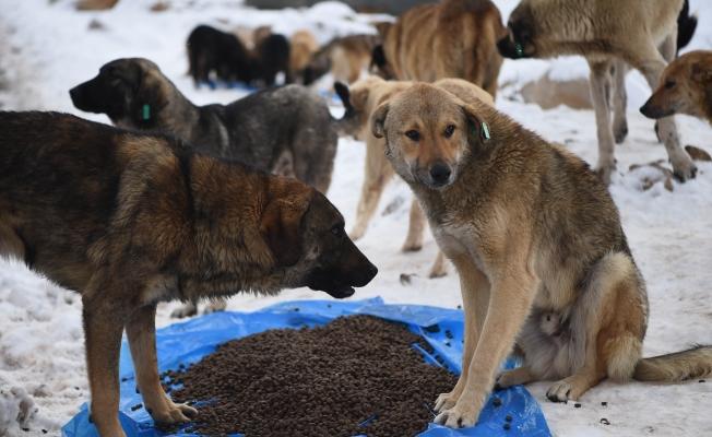 Sokak hayvanları için besleme çalışması