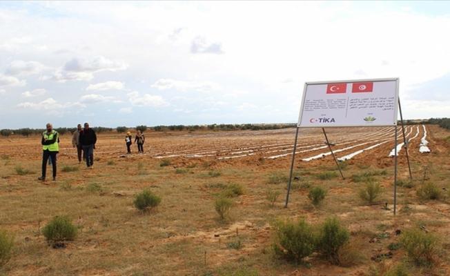 TİKA'dan Tunuslu çiftçilere destek