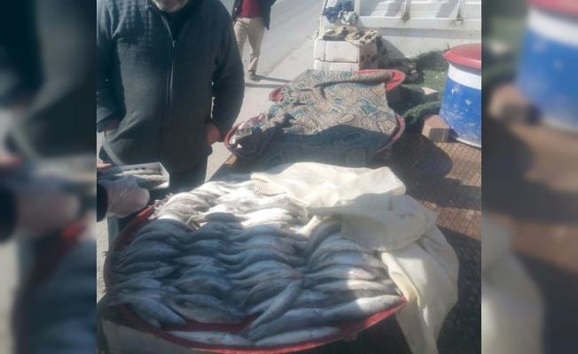 Konya'da boy limiti altı balık satışına ceza