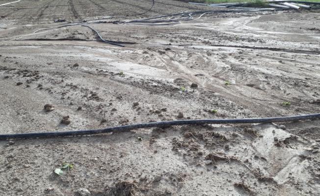 Beypazarı'nda sağanak ekili alanlara zarar verdi