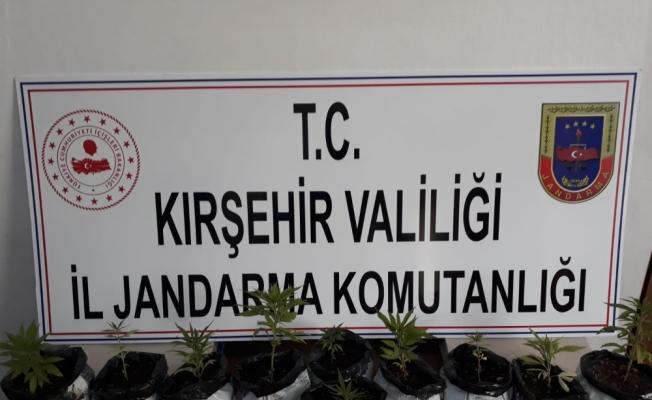 Kırşehir'de Hint keneviri operasyonu