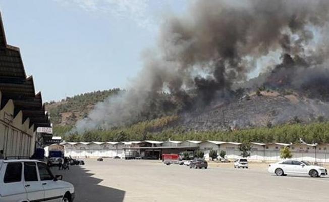 Son 24 saatte üçüncü orman yangını