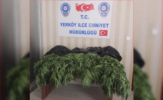 Yozgat'ta hint keneviri operasyonu