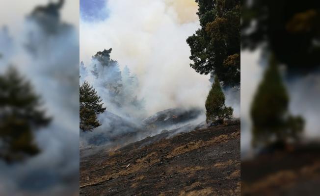 GÜNCELLEME - Yozgat'ta orman yangını