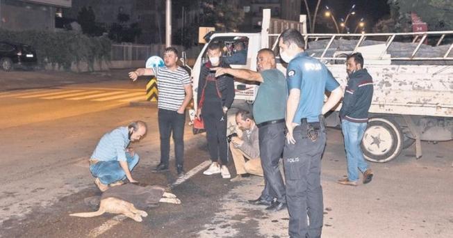 Otomobilin çarptığı köpek için vatandaşlar seferber oldu...
