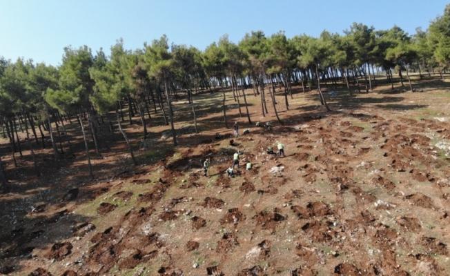 Hatay'da yanan orman alanları yeniden yeşillendiriliyor