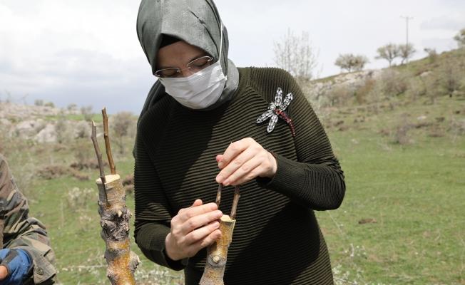 Akyurt'ta 1000 ağaç aşılandı