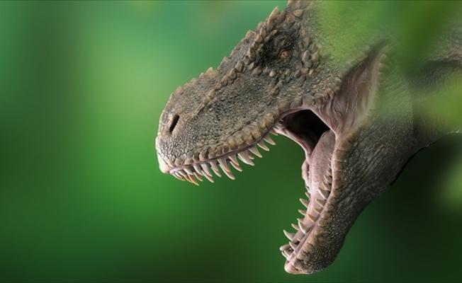 Bilim insanları, Avustralya'nın en büyük dinozor türünü keşfetti