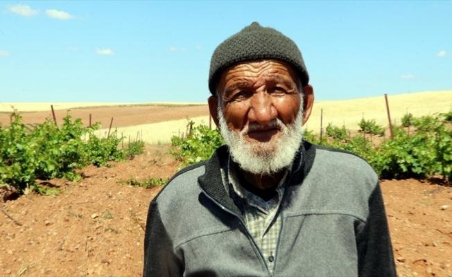 Bağında yetiştirdiği üzümleri satmak yerine köylülere ikram ediyor