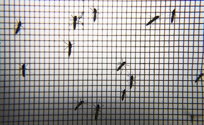Böcek bilimcilerden Asya Kaplan Sivrisineği uyarısı