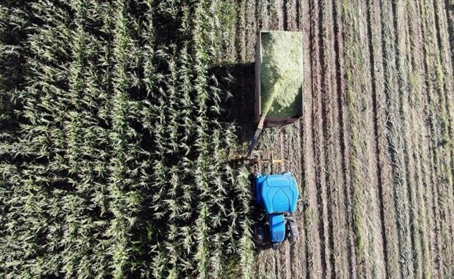 Ağrı'da çiftçiler devlet destekli silajlık mısırın hasadına başladı