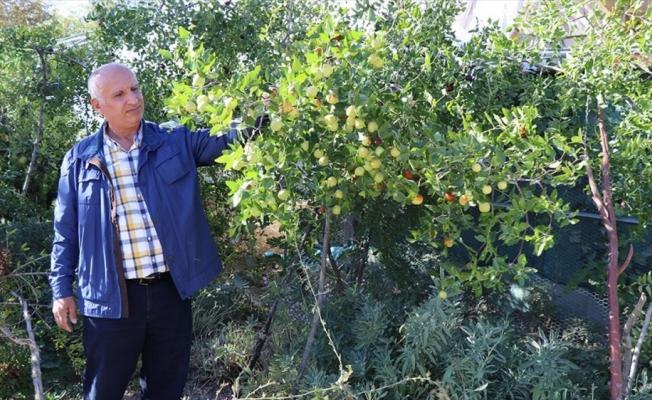 Elazığlı terzi pepinodan hünnapa çeşit çeşit meyve yetiştiriyor