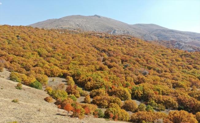 Sivas'ta Tecer Dağı ve Paşabahçe Mesire Alanı sonbahar renkleriyle etkiliyor