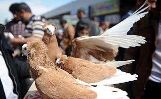 Ankara'da Kuş Pazarı...