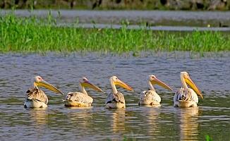 Nallıhan Kuş Cennetinde Foto Safari Yapılacak