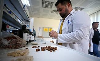 Fındık atıklarından kemoterapi ilacı etken maddesi