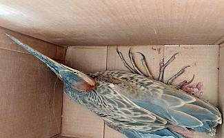 Sultan Sazlığı'nda bulunan yaralı kuşlar tedaviye alındı