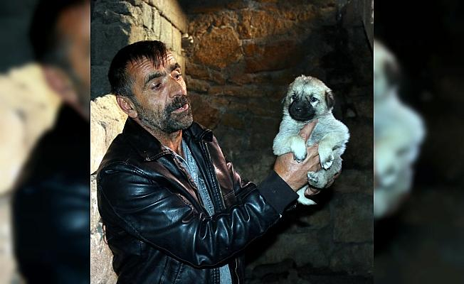 Bodruma giren hırsızlar 11 Kangal köpeği yavrusunu çaldı