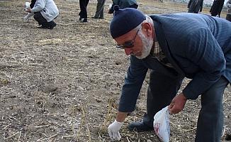 Seydişehir'de tarla faresiyle mücadele
