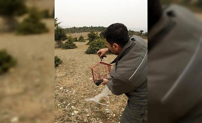 Saka kuşu avına ceza