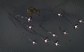'Kuş oteli' rekor sayıda flamingo ağırlıyor