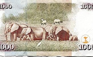 Madeni paralara hayvan resimlerini bastılar