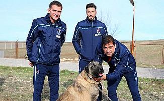 Ünal Karaman ile Sosa'dan kangal köpeği çiftliğine ziyaret
