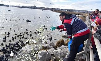 Ankara Büyükşehir Sokak Hayvanları İçin Çalışıyor!