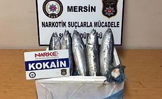 Balık karnında uyuşturucu sevkiyatı