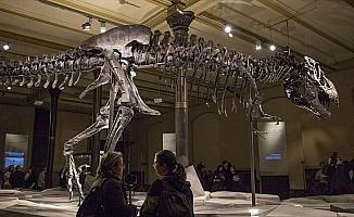 Kanada'da dünyanın en büyük ve en yaşlı T-rex fosili bulundu