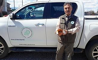 Hasta angut kuşu tedaviye alınıyor