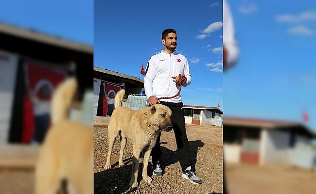 Şampiyon güreşçinin Kangal köpeği ilgisi