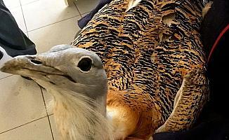 Eskişehir'de yaralı Toy kuşu bulundu