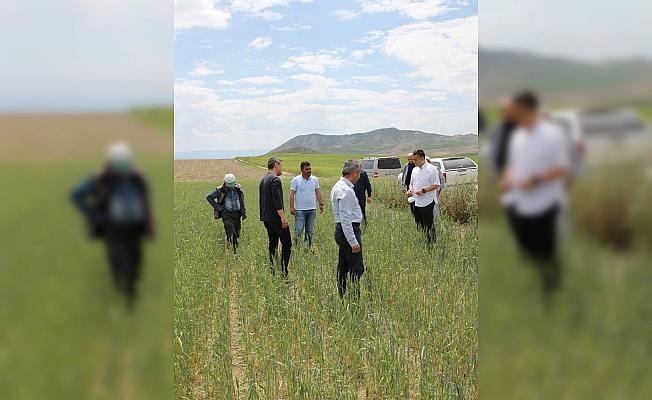 Kaymakam Aksoy, tarım arazilerini inceledi