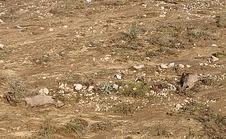 Kırşehir'de sele kapılan 35 koyun telef oldu