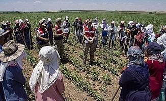 Mevsimlik işçiler jandarmanın takibinde