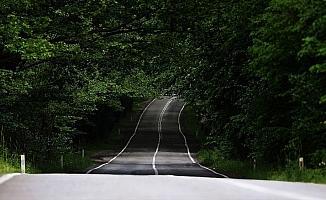 Safranbolu'nun ağaç tünelli yolları görenleri büyülüyor