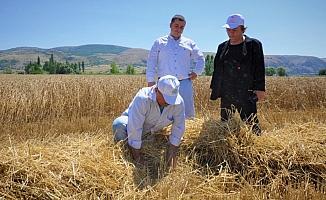 Hububat hasadında dane kaybı azalıyor