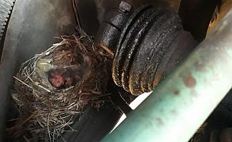 Motoruna yuva yapan kuşlar için tırını 45 gün çalıştırmadı