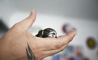 Parkta bulunan yavru ebabil kuşu koruma altına alındı