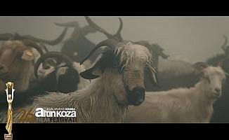 Çukurova'da 'Altın Koza' heyecanı