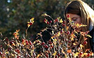 Bangladeşli akademisyenler Çankırı'da doğadaki meyveleri inceledi