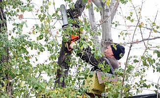 Yenimahalle'de budanan ağaçlar dar gelirlilere yakacak olarak dağıtılıyor