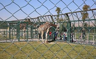 Kayseri Hayvanat Bahçesi ziyarete kapatıldı