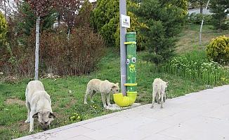 Bala Belediyesi, sokak hayvanlarını unutmadı